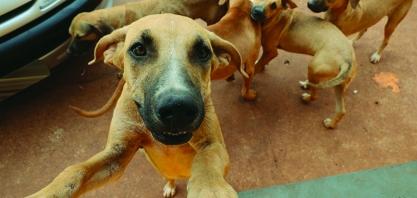 Secretaria de Saúde de Sertãozinho divulga resultados do Censo Animal 2014