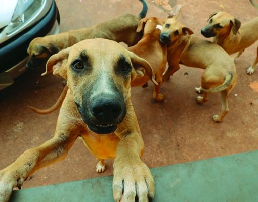 Sertãozinho possui mais de 20 mil cães domiciliados, segundo pesquisa do Censo Animal 2014. FOTO: ADILSON LOPEZ
