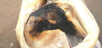 ATROCIDADE - Cachorro é espancado e queimado vivo