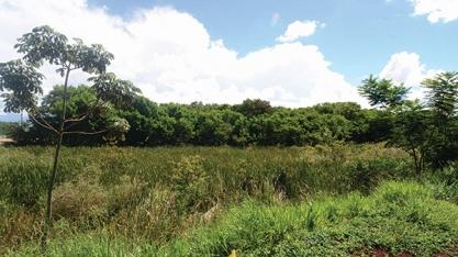 Casa da Agricultura de Sertãozinho realiza Cadastro Ambiental Rural