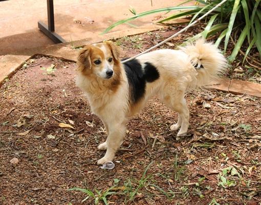 Após os cuidados recebidos pelo Canil Municipal,  Spike está liberado para adoção. Foto: Lena Aguilar