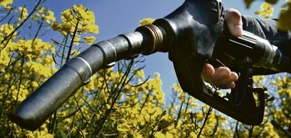 ENERGIA - Biocombustíveis geram 1,7 milhão de empregos no mundo