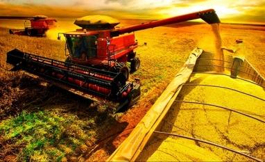 AGRICULTURA - Conab diz que safra de grãos pode ser recorde com 234,3 milhões de toneladas
