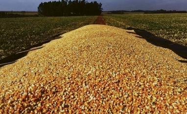 AGRONEGÓCIO - Vendas externas de milho disparam em julho e têm alta 122%