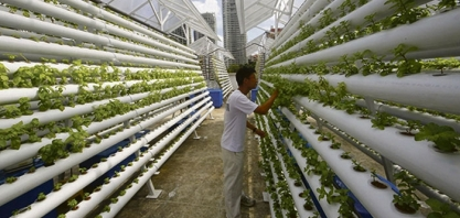 FUTURO - Fazendas verticais: produção pode atingir o triplo da agricultura convencional