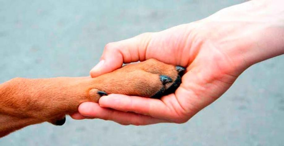 MEIO AMBIENTE - Semana de Defesa e Proteção Animal começa na segunda-feira, dia 02
