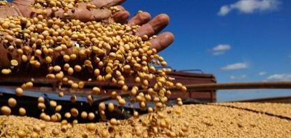 SOJA - Alta do dólar impacta no preço da soja que valoriza 6,21% em MS, neste mês