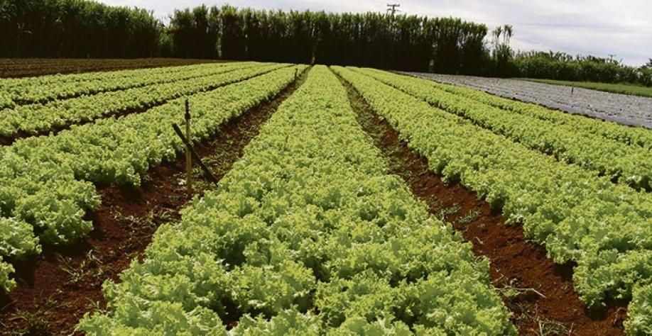 A pesquisa pode gerar benefícios para a produção de alimentos em escala mundial