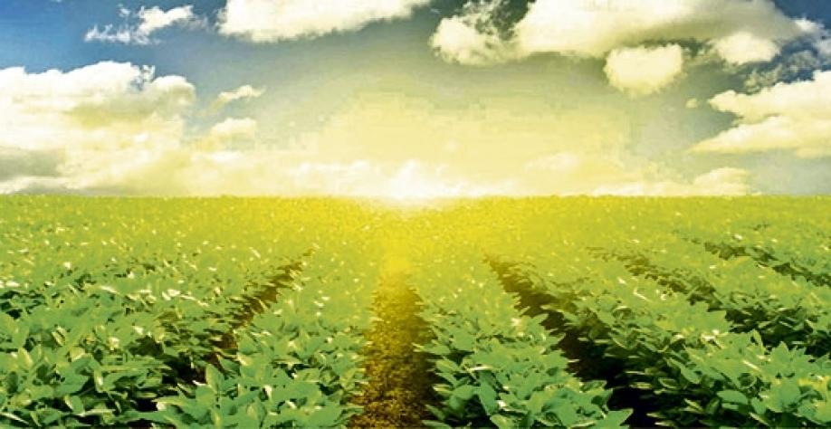 OPINIÃO - Mais um record do Agro