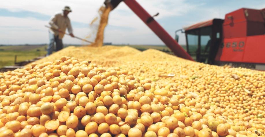 Soja representa 24,7 % do total apurado em agosto. O trigo contribuiu com alta de aproximadamente 80% e o algodão com 44%. Foto Divulgação.