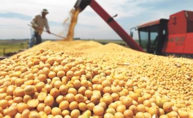 MERCADO – Valor da produção agropecuária é de R$ 565,6 bilhões
