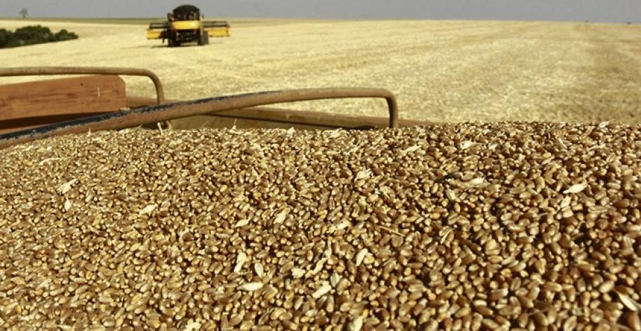 Produção estimada para o primeiro levantamento da safra 2018/19 indica um volume entre 233,6 e 238,5 milhões de toneladas