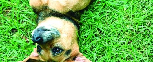 Praça 21 de Abril terá ações em favor do meio ambiente e dos animais, no próximo dia 09