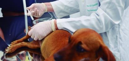 UBS Animal de Sertãozinho entra em funcionamento