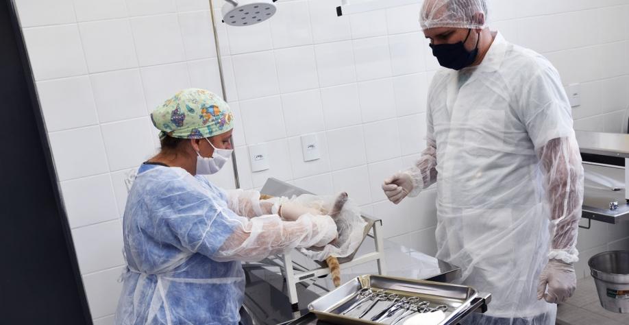 UBS Animal retoma projetos de castração sem custo e de baixo custo, a partir do dia 1º de julho