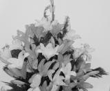 Decoração lindíssima: Orquídea Negra