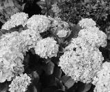 Flores por todos os cantos