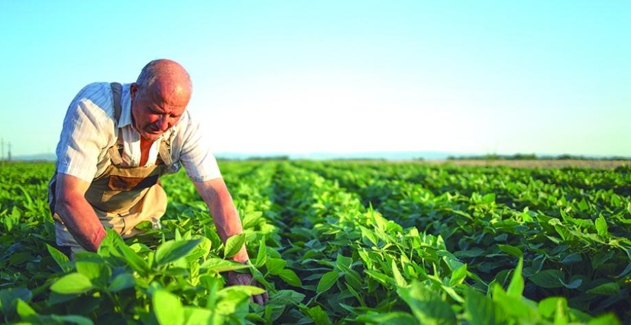 Agricultor pode ganhar tempo e economizar dinheiro com alternativa certa de regularização de reserva legal